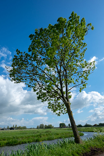 boom_voorkant_polder