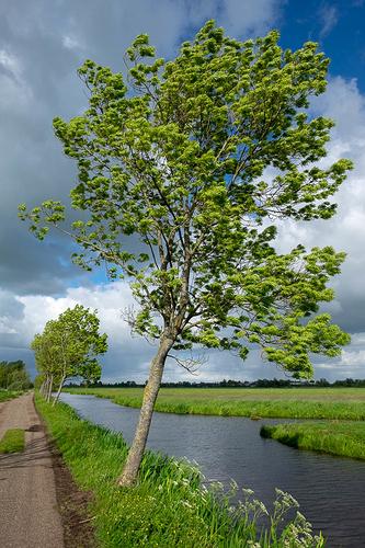 boom_achterkant_polder