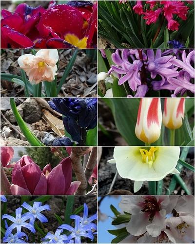 bloemen%2001apr2019